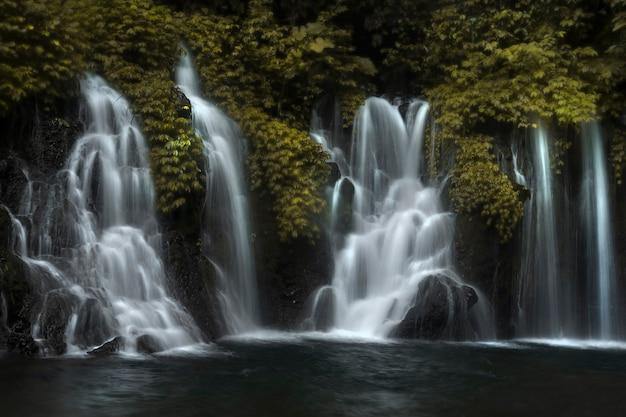 Belle vue sur la cascade dans la forêt tropicale