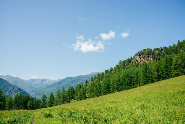 Belle vue sur la colline de la forêt verte avec des rochers et une grande chaîne de montagnes.