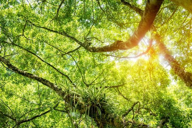 Belle vue de dessous des grands arbres dans la forêt