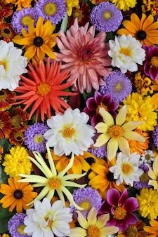 Belle vue florale. différentes fleurs de jardin en automne, la vue du sommet.