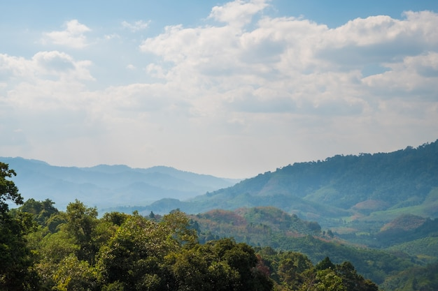 Belle vue sur la forêt tropicale de montagne