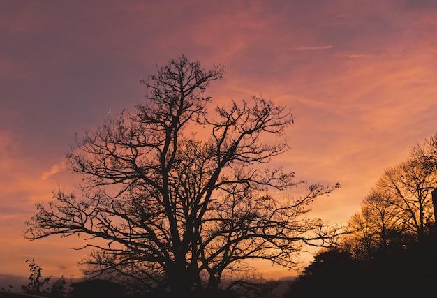 Belle vue sur de grands arbres avec les nuages dans le ciel coloré