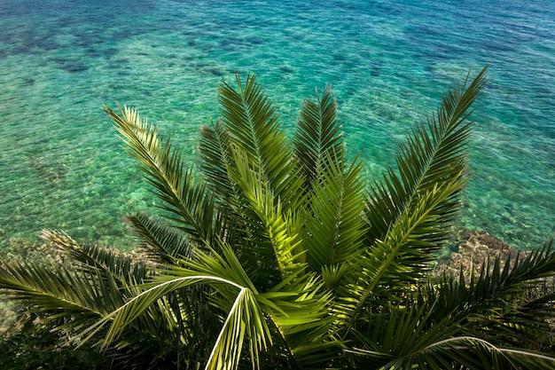 Belle vue d'en haut sur le palmier vert poussant en mer avec de l'eau turquoise
