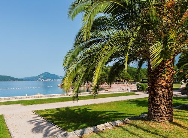 Une belle vue matinale du parc d'été avec palmier près de milocer beach (monténégro, budva)