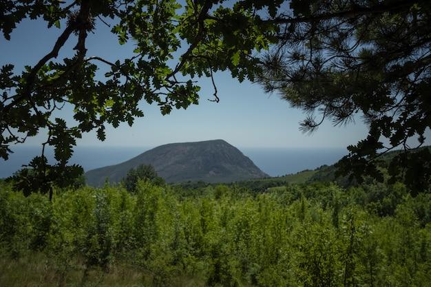 Belle vue sur la montagne à travers les branches d'arbres feuillus. lac, la mer, la crimée