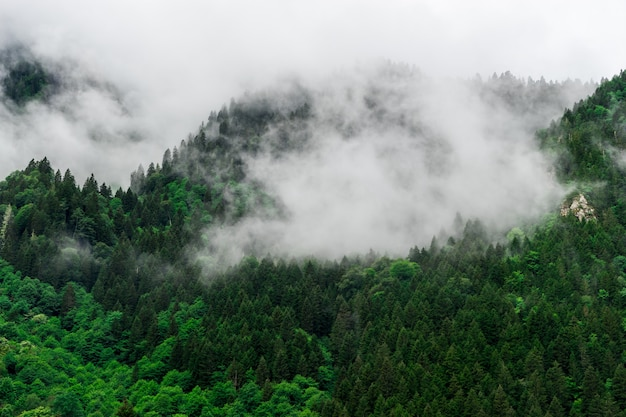 Belle vue sur les montagnes brumeuses sur la forêt de pins des highlands et des arbres