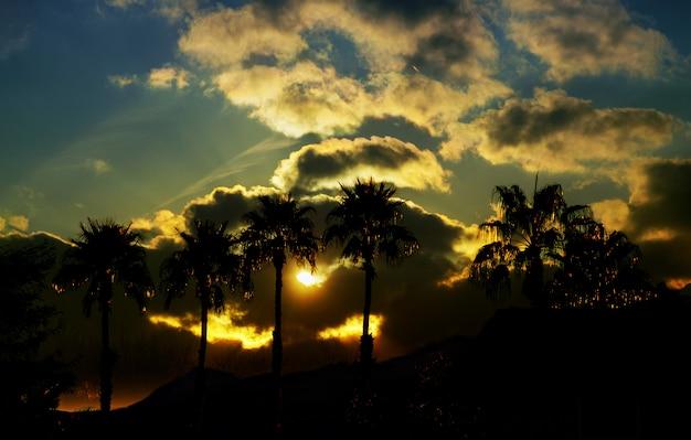 Belle vue avec nature et silhouette palmier dans le ciel au coucher du soleil