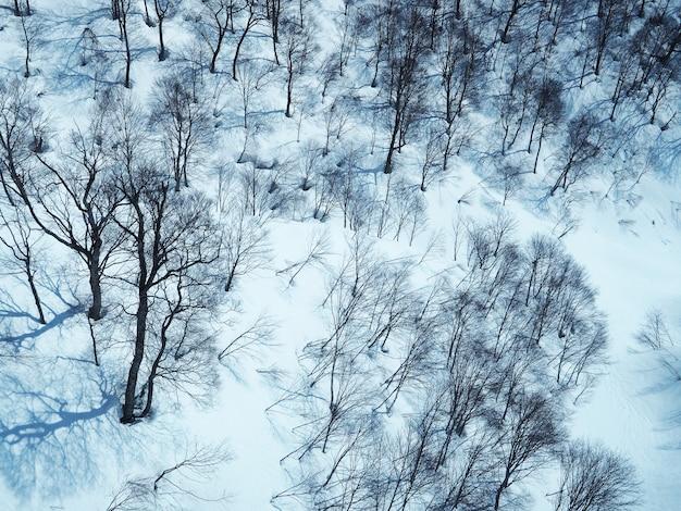 Belle vue sur la neige blanche recouvre toute la forêt.