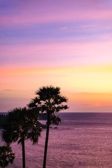 Belle vue et palmiers et ciel pastel.