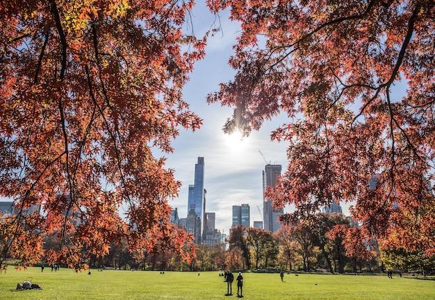 Belle vue sur un parc et de hauts immeubles derrière avec des branches d'arbres au premier plan