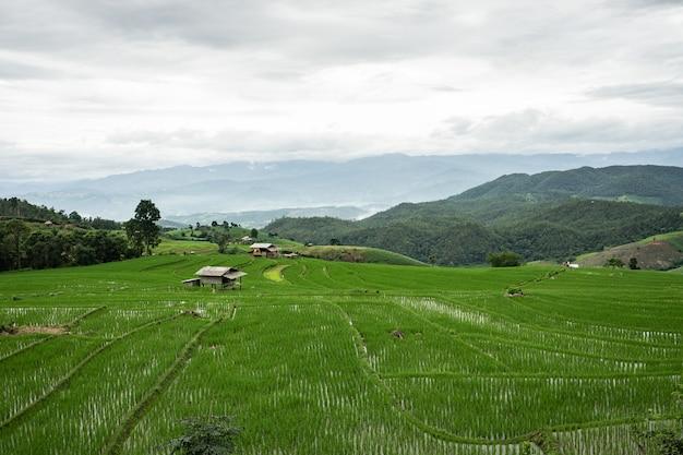 Belle vue de paysage de rizières en terrasses, maison rurale et montagne.