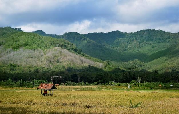 Belle vue sur le paysage des rizières en terrasses