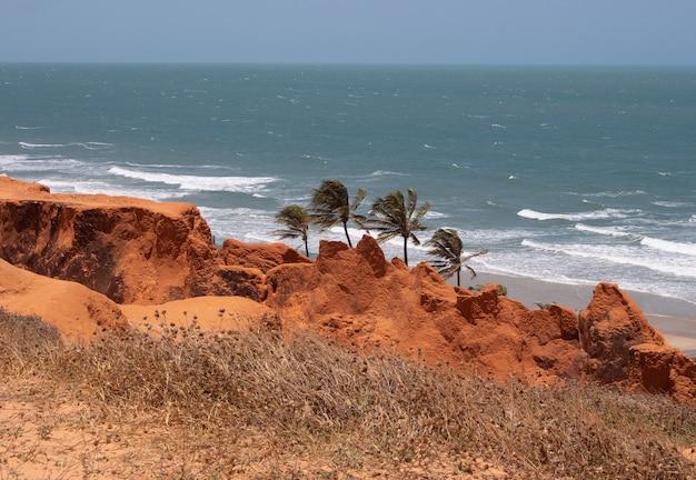 Belle vue sur la plage d'ouro branco avec trois cocotiers avec une herbe sèche