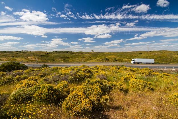Belle vue printanière sur les collines de la campagne de l'algarve avec des buissons jaunes et un ciel bleu avec des nuages blancs situées au portugal.