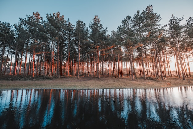 Belle vue sur le reflet des arbres dans un lac capturé à oostkapelle, pays-bas