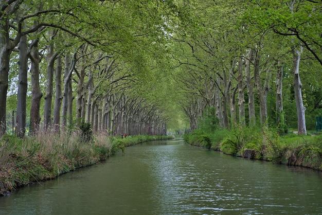 Belle vue sur la rivière qui coule à travers les bois verts