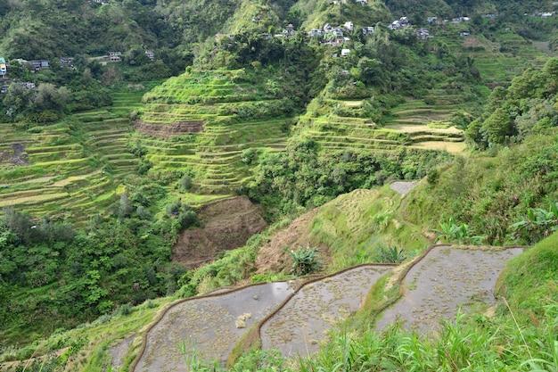 Belle vue sur les rizières en terrasses de banaue à luzon, philippines