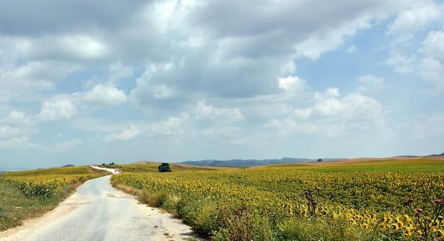 Une belle vue sur une route non goudronnée près d'un champ de tournesol sous un ciel nuageux