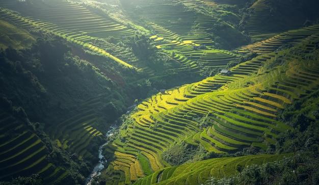 Belle vue sur la terrasse de riz à mu cang chai, vietnam