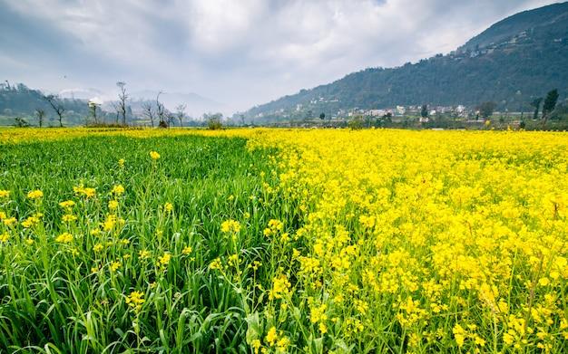 Belle vue sur les terres de fram de fleurs à katmandou, népal