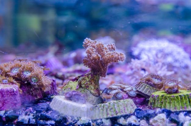 Belle vue sur la vie marine
