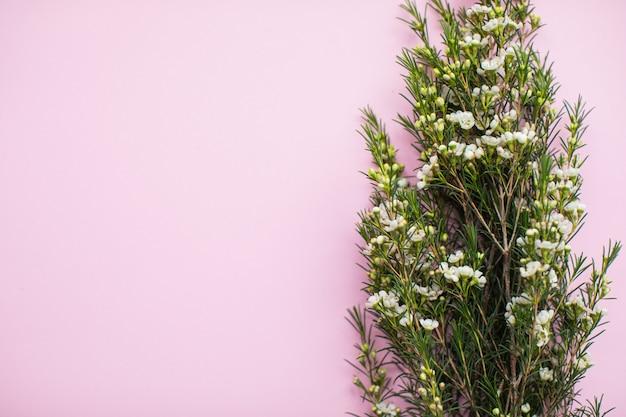 Belle waxflower blanche sur fond de papier multicolore avec espace de copie. printemps, été, fleurs, concept de couleur, journée de la femme.