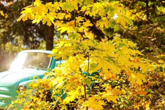 Une belle zone pour les photos avec des feuilles jaunes sur les branches des arbres et une voiture verte par une journée ensoleillée d'automne.