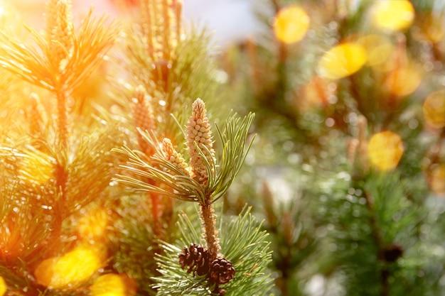 Belles bosses vertes sur l'arbre, fond d'été. arbre magique de la photographie sur fond flou
