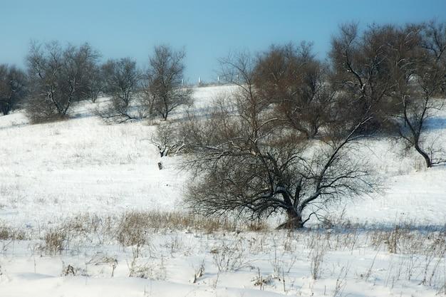 Belles collines de paysages d'hiver pittoresques et arbres à feuilles caduques journée ensoleillée sans nuages glaciale.