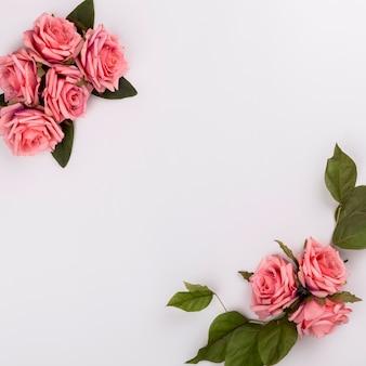 Belles compositions de rose