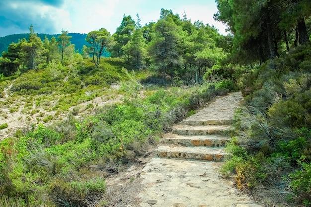 Belles étapes en bord de mer sur la nature dans le fond du parc