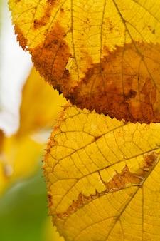 Belles feuilles sur un arbre