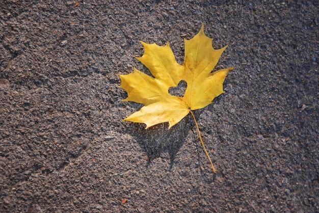 Belles feuilles d'automne. automne doré. mise au point sélective.
