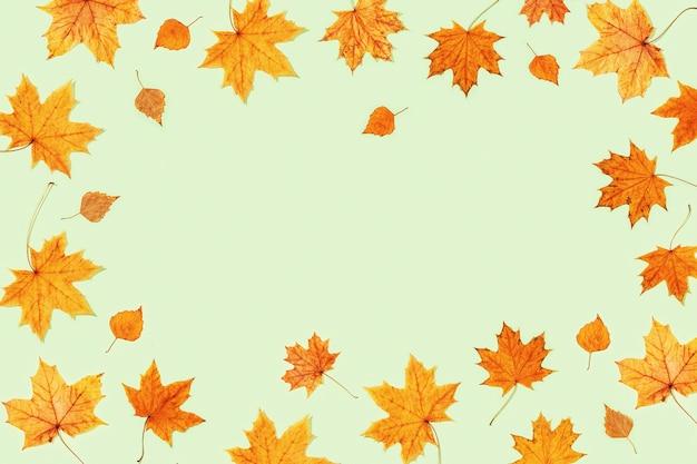 Belles feuilles d'automne jaunes d'érable et de bouleau sur papier de couleur vert clair.