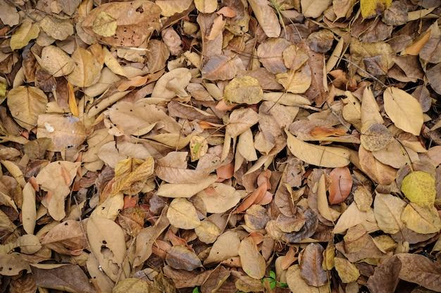 Belles feuilles sèches naturelles brunes et jaunes tombent en automne.