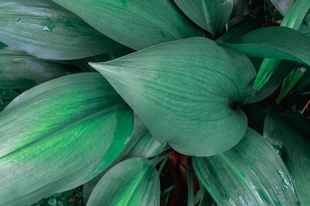 Belles feuilles vertes et fond de feuilles