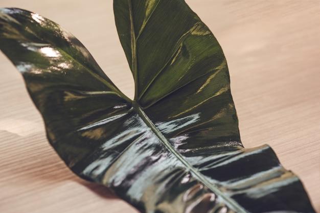 Belles feuilles