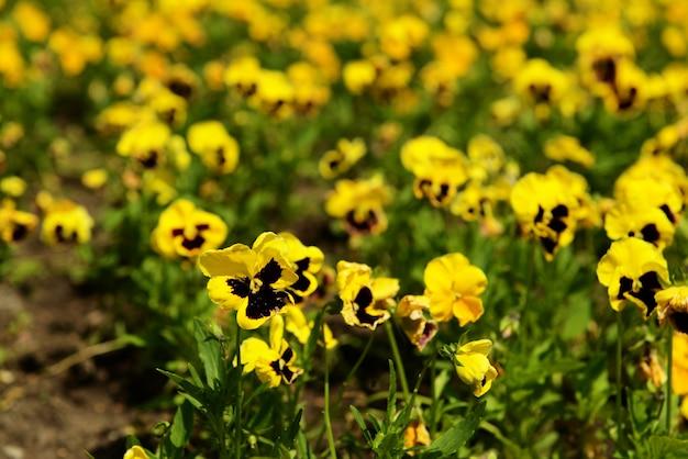 Belles fleurs au parc