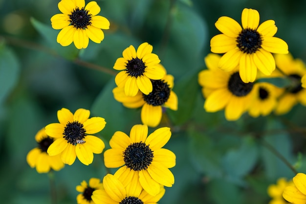 Belles fleurs d'automne jaune sur fond naturel.