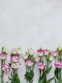 Belles fleurs blanc-rose sur une surface blanche. fond de fleurs de printemps. image verticale, mise à plat, espace de copie