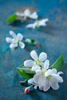 Belles fleurs blanches fraîches de pommier