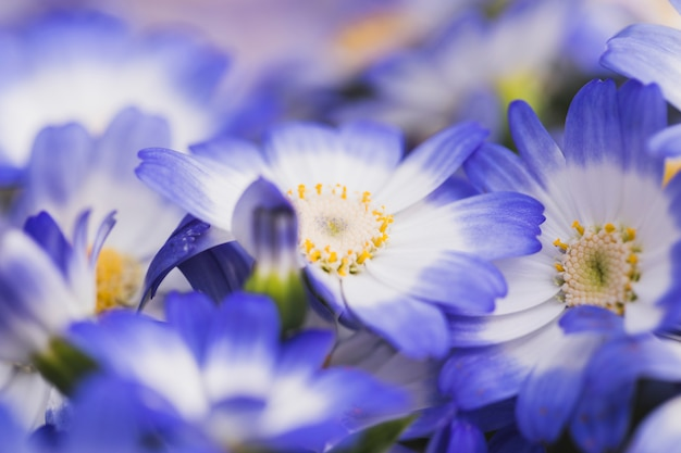 Belles fleurs bleues fraîches