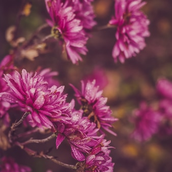 Belles fleurs colorées sur le fond du soleil du matin