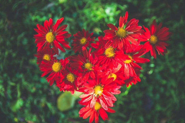 Belles fleurs colorées sur le jardin