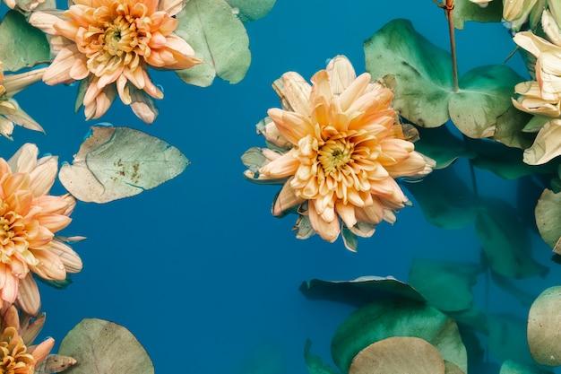 Belles fleurs dans l'eau