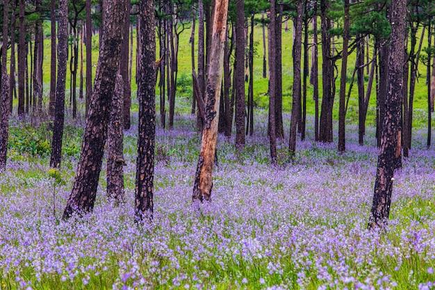 Belles fleurs dans la forêt d'arbres