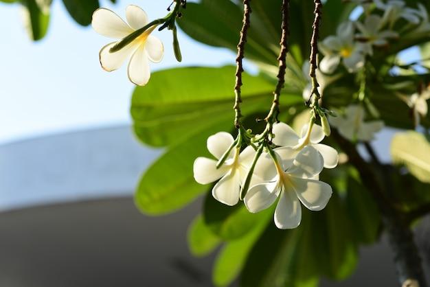 Belles fleurs dans le jardin à côté de la maison. feuilles vertes avec une belle lumière du soleil utilisées comme image de fond.