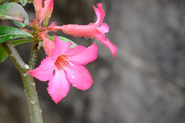 Belles fleurs dans le jardin floraison en été. jardin officiel paysagé.