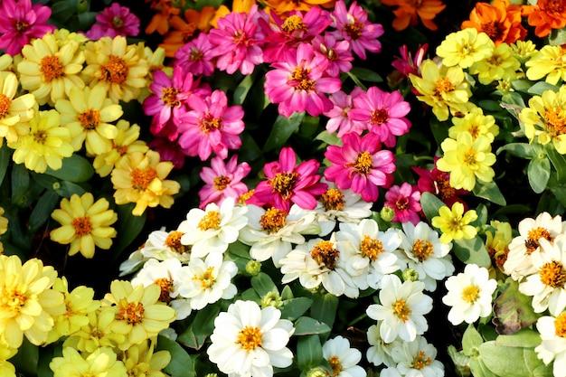 Belles fleurs dans le jardin