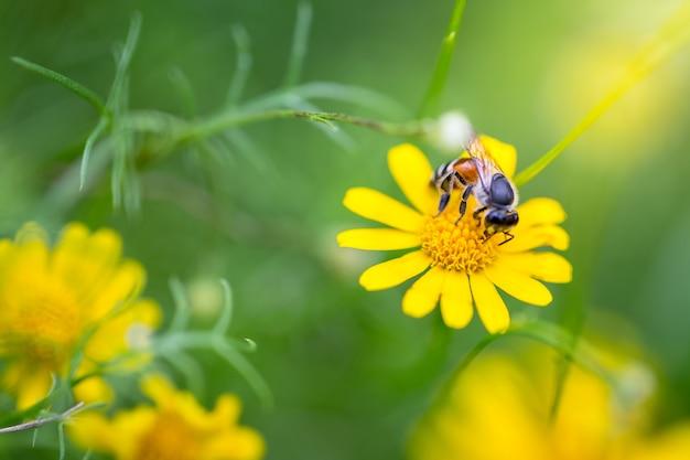 Belles fleurs dans la nature, espace copie.